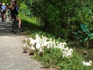 Ducks everywhere.