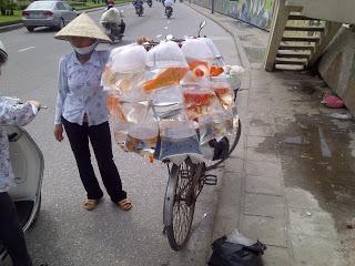 Goldfish+5
