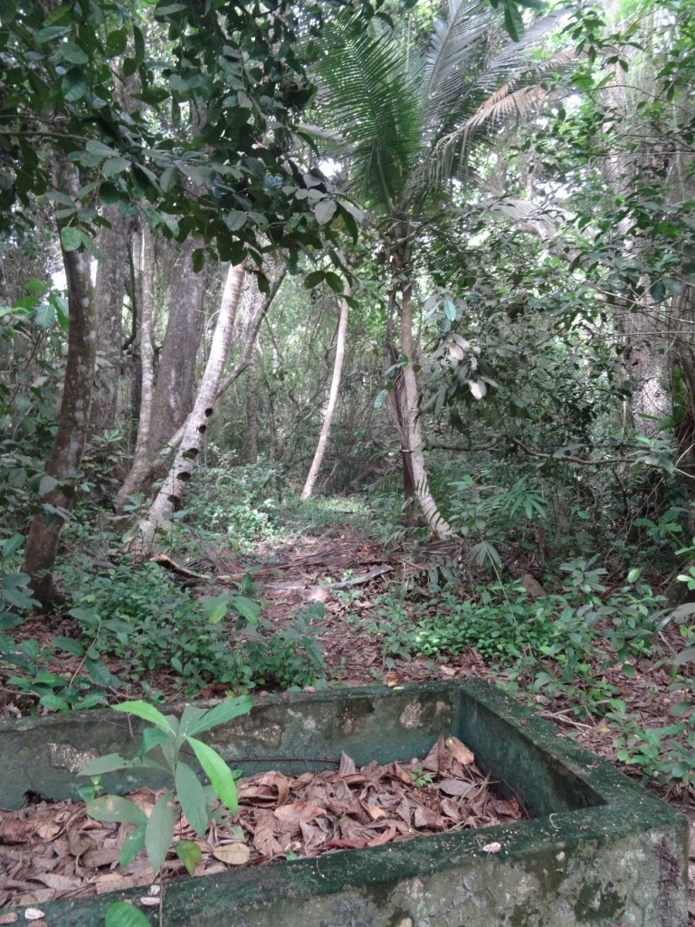 JunglePath