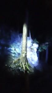 forestillumtree