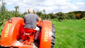 Bob Giffen checks out the orchard on a classic 1954 Case tractor.