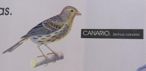 CanarioCropped copy